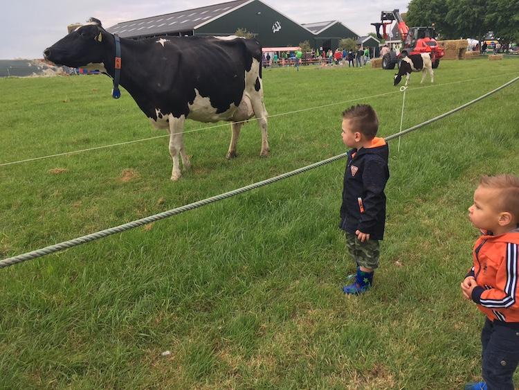 koeienbento boerderijdagen